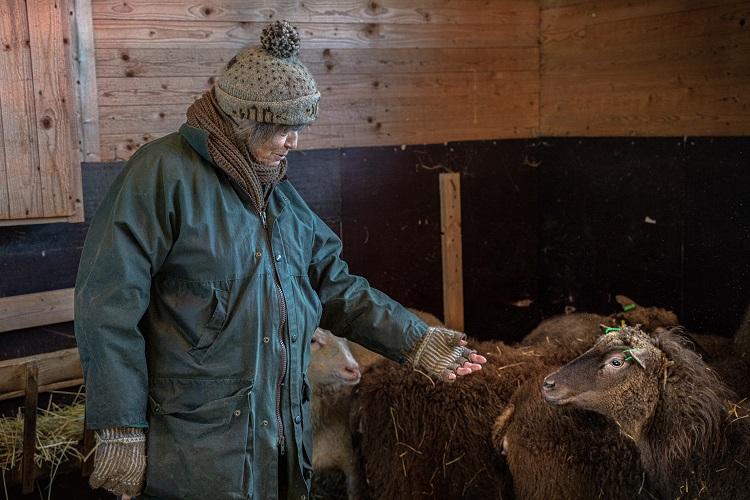 Jill Christensen umgås med får i fårhuset. Hon är klädd i stickade produkter med egen design.